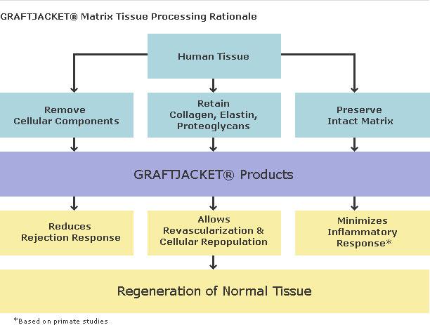 regeneration tissue
